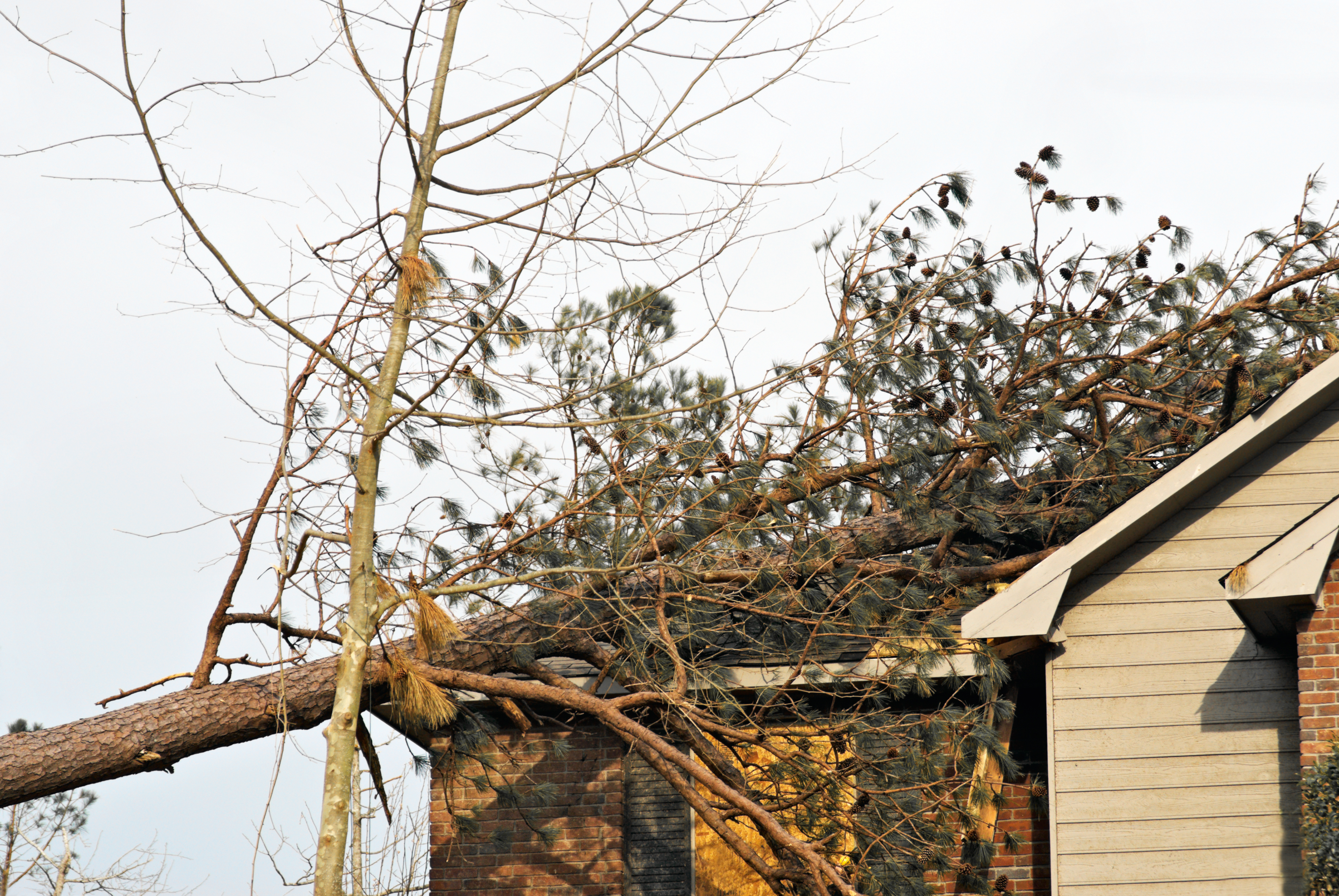 pine tree on top of a house caused by a natural disaster.